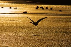 蕪栗沼の夕暮れ