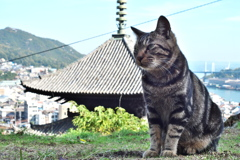 猫と天寧寺三重塔