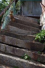 階段(ねこ付)