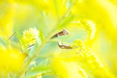黄色い国のハンター