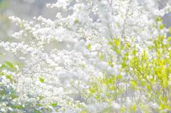 柔らかな春。