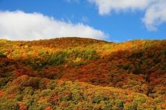紅葉狩り 山一面