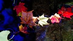 紅葉天の川