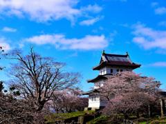 桜に囲まれた古城