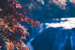 かさかさ紅葉ときらきら滝