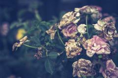 花も熟した感じに惹かれる