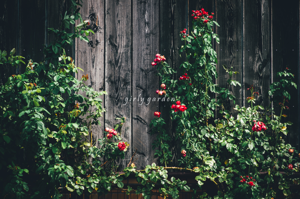 girly garden