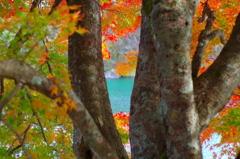 五色沼の秋~紅葉