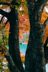 五色沼の秋~沼