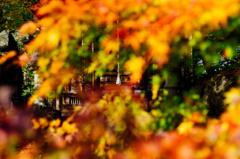 紅葉の隙間から祈る