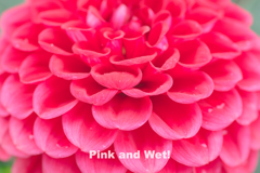 Pink and Wet!