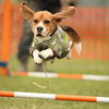 空飛ぶ犬達
