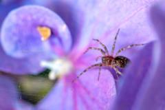 紫陽花の中の住人