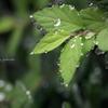 秋雨の中で。。