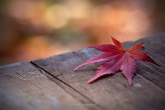 秋色探しⅡ