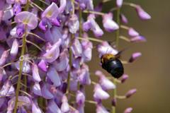 紫の誘いⅡ