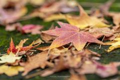 秋色見つけたⅠ