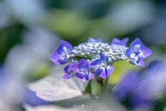 Melting blue