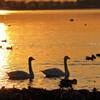 多々良沼に沈む夕日