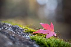 秋色探しⅣ
