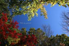 Vivid  Autumn