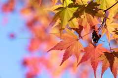 秋色探しⅠ