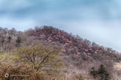 覚満淵から望む篭山