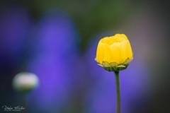 この花何の花?