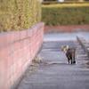 多々良沼公園の野良猫