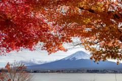 紅葉越しの富士