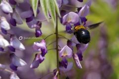 紫の誘いⅠ