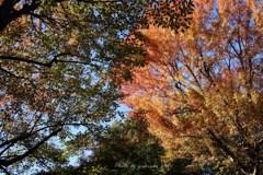 入り乱れる秋