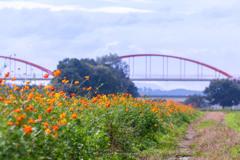 水管橋とコスモス