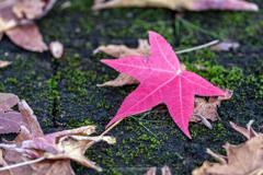 秋色見つけたⅡ