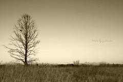 冬枯れの木