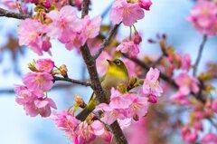 囲まれて・・・春♪