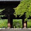 新緑の三門~南禅寺
