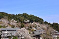 桜の花束と本堂