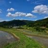 稲渕の初夏