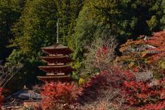 昭和の名塔の秋