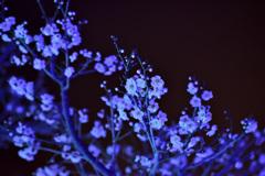 闇の中で~梅