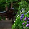 紫陽花のある寺 壱