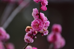春の気配⑥