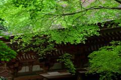 新緑の灌頂堂