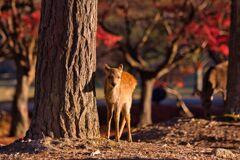 鹿たちの朝~浮雲園地 〈四〉