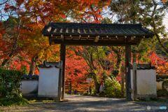 晩秋~根来寺の紅葉