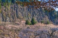 切立つ屏風岩と山桜