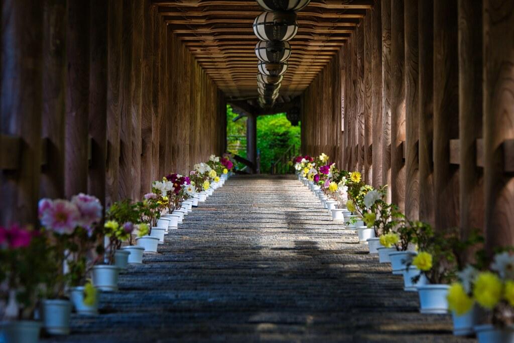 華の登廊~長谷寺