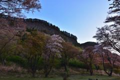 山桜散る #4