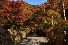 菩提山の秋②